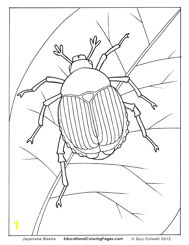 the very clumsy click beetle coloring pages
