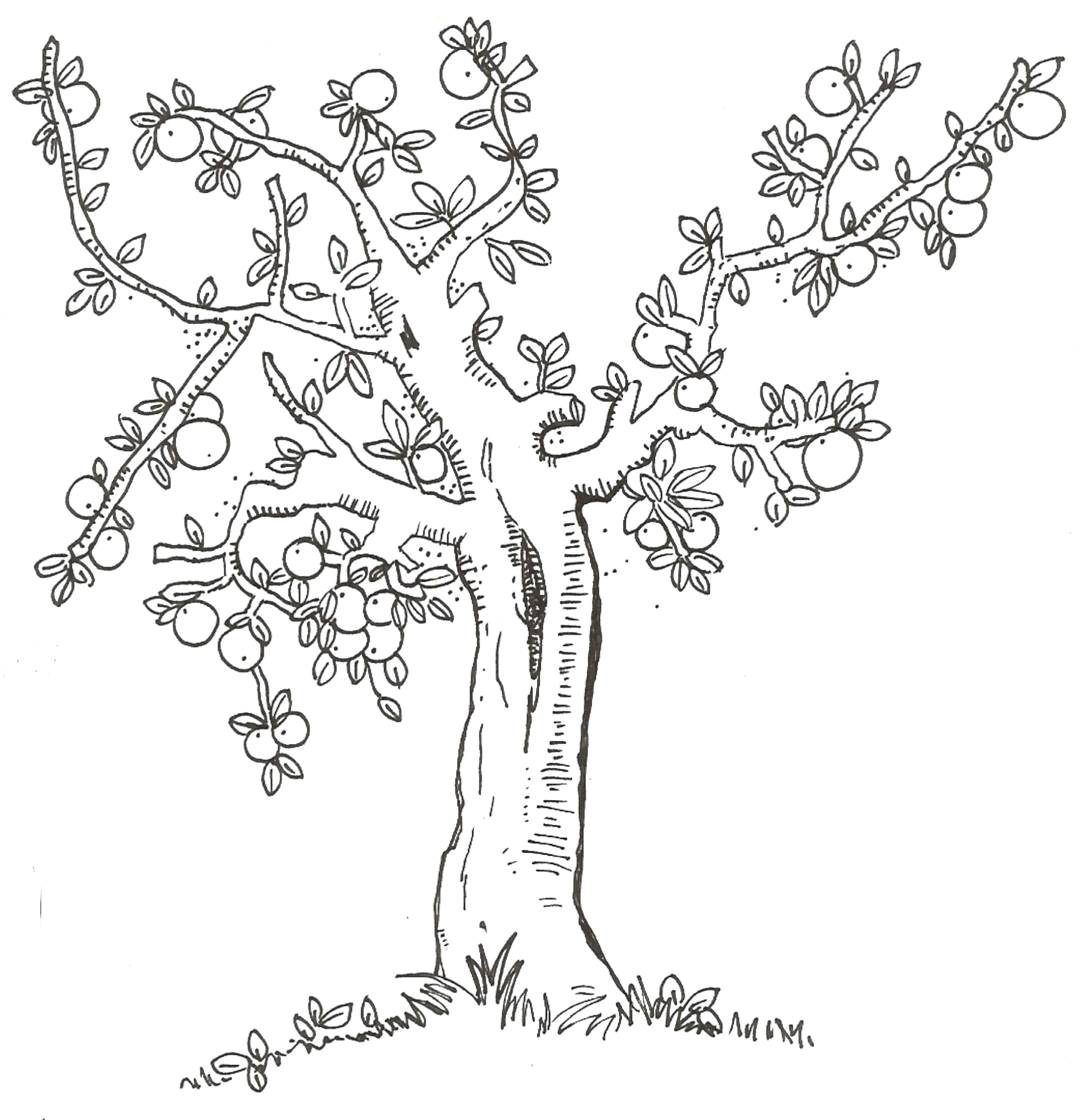 I Am Thankful for Trees Plants and Flowers Coloring Page Lesson 10 I Am Thankful for Trees Plants and Flowers I