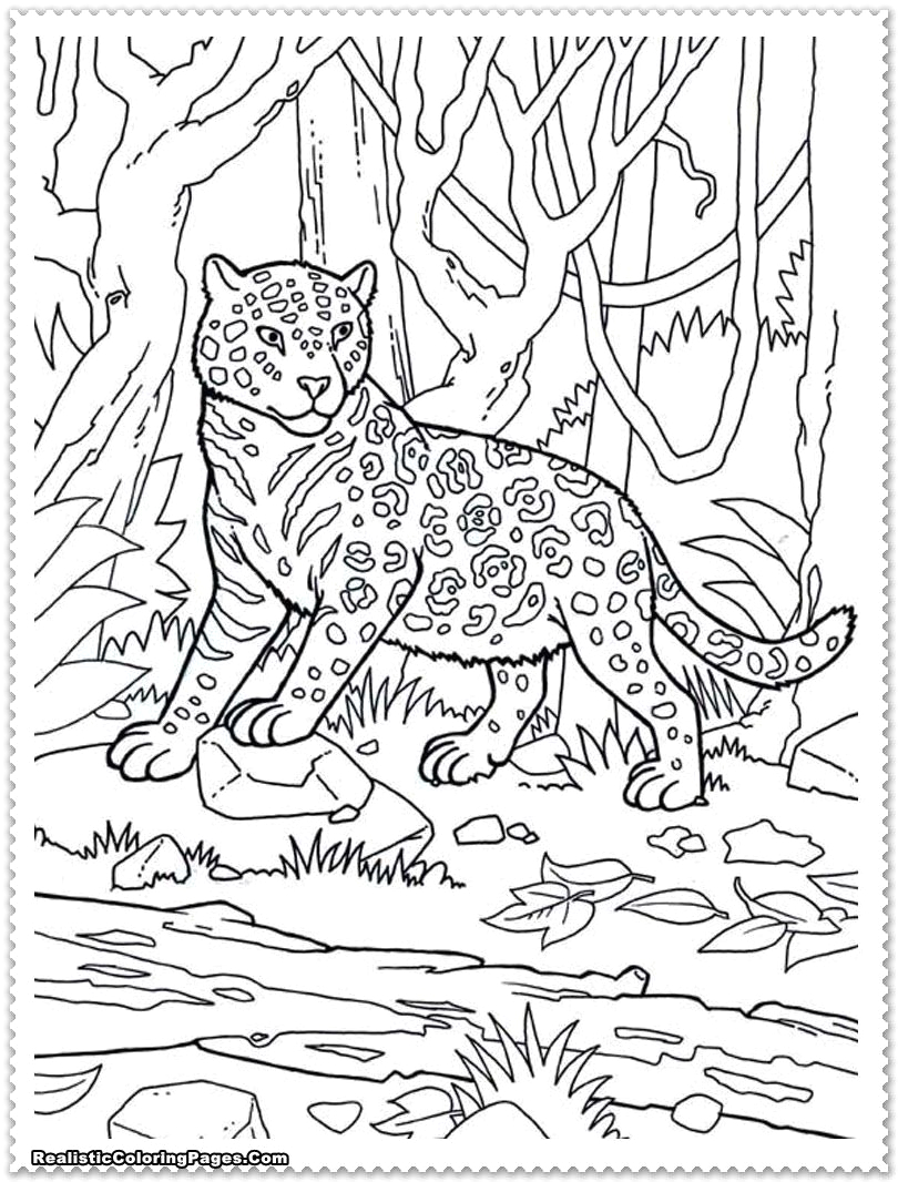 Coloring Pages for Animals In the Jungle Jungle Animals Coloring Pages Free Coloring Home