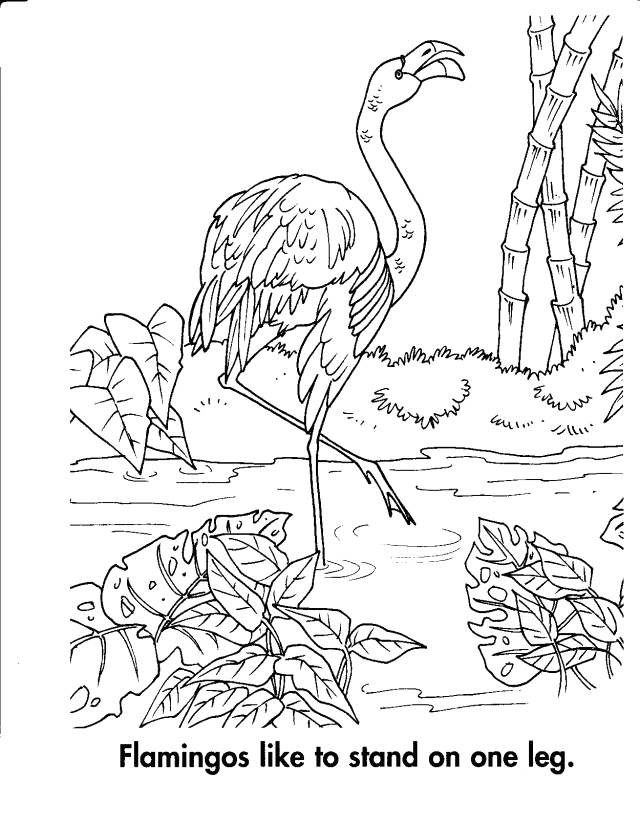 animal habitat coloring pages google
