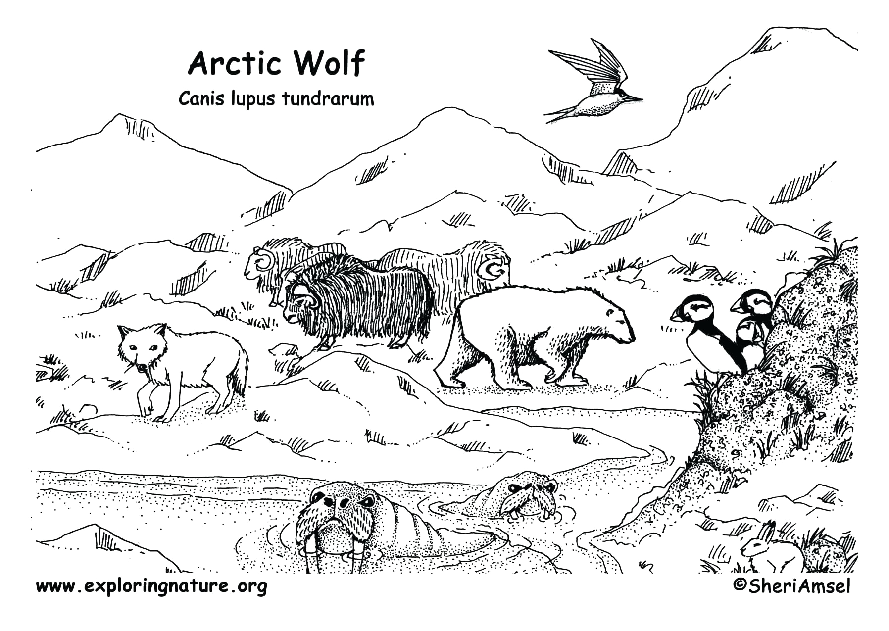 Coloring Pages Of Animals In their Habitats Arctic Habitat Coloring Pages Collection