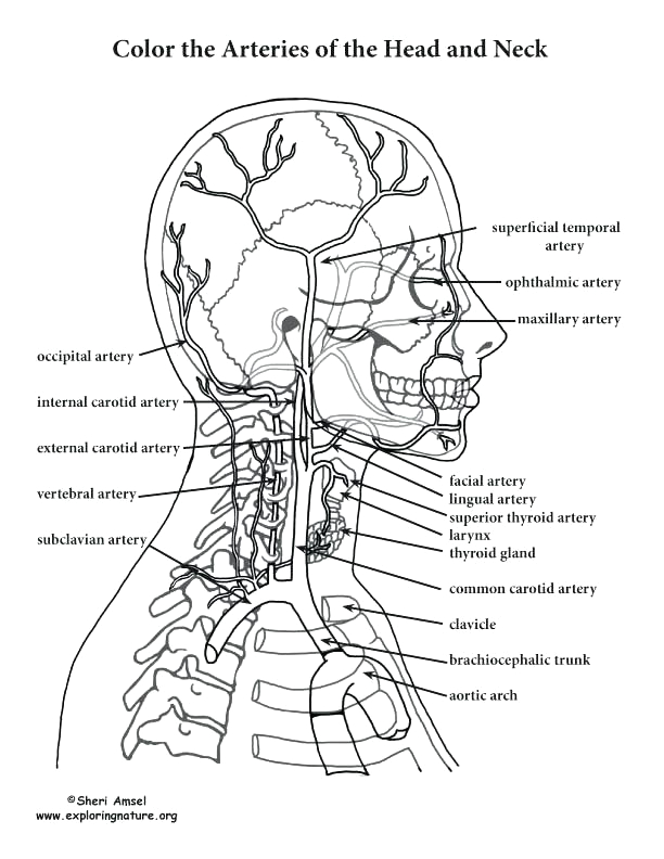 anatomy and physiology coloring pages free