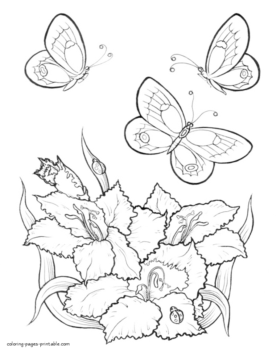 butterfly flower coloring pages