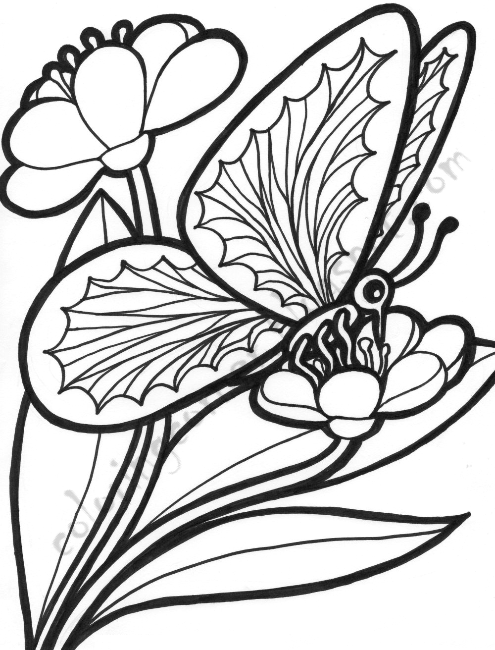 coloring pictures of flowers and