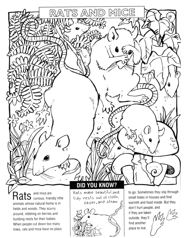 15 one and only ivan coloring pages