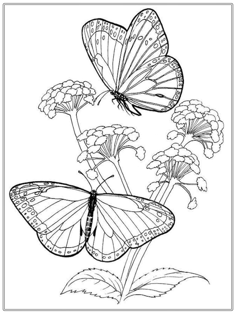 Butterfly and Flower Coloring Pages for Adults butterfly and Flower Coloring Pages for Adults at