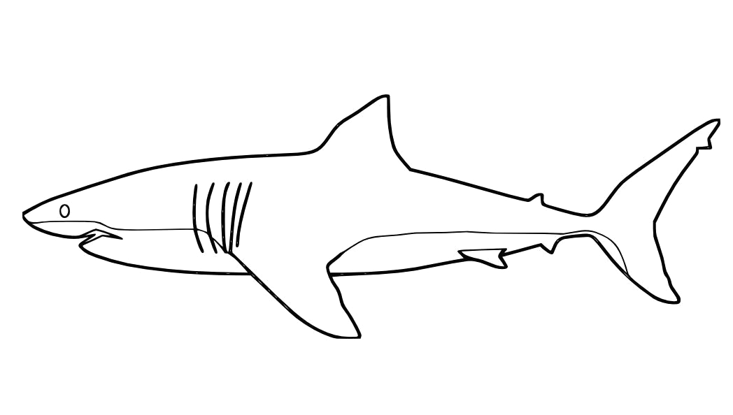 Coloring Pages Of A Great White Shark Great White Shark Coloring Page