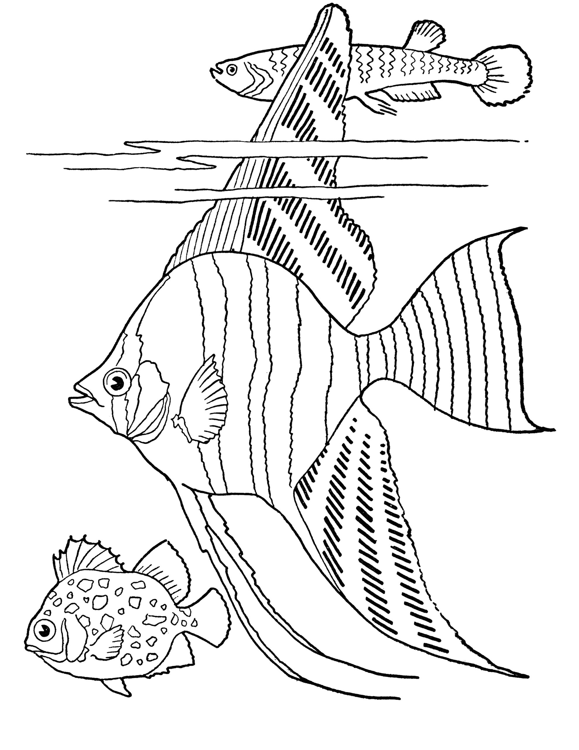 Tropical Fish Fish Coloring Pages for Adults Free Printable Adult Coloring Page Tropical Fish the