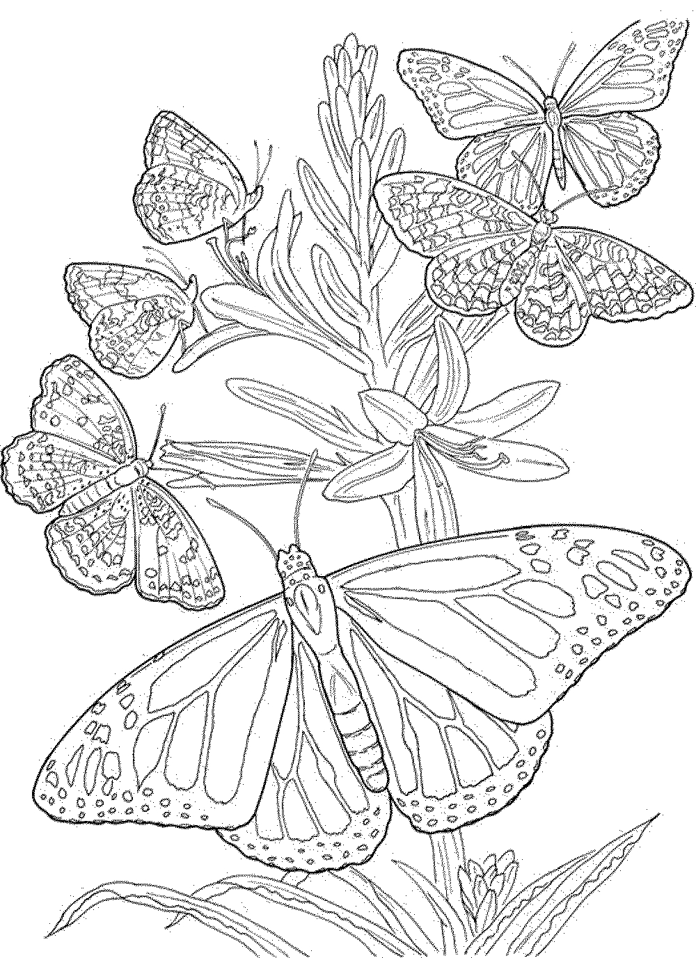 butterfly coloring pages for adults free printable