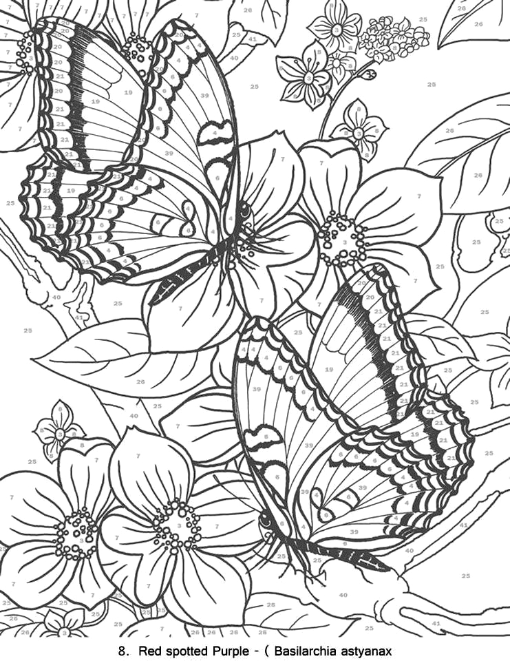 advanced coloring pages of butterfly for adults