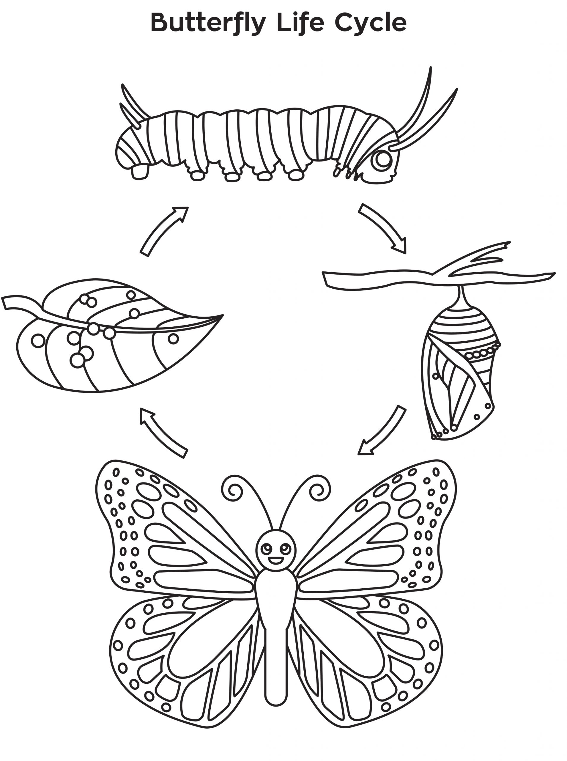 Butterfly Life Cycle Coloring Pages for Kids Life Cycle Of A butterfly Coloring Page Free Printable