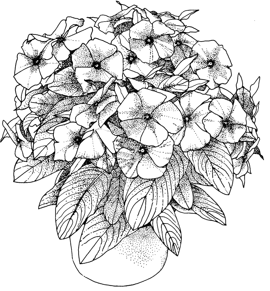 Free Coloring Pages Of Flowers for Adults Flower Coloring Pages for Adults Best Coloring Pages for