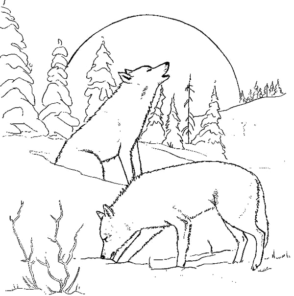 wolf couple at night coloring page