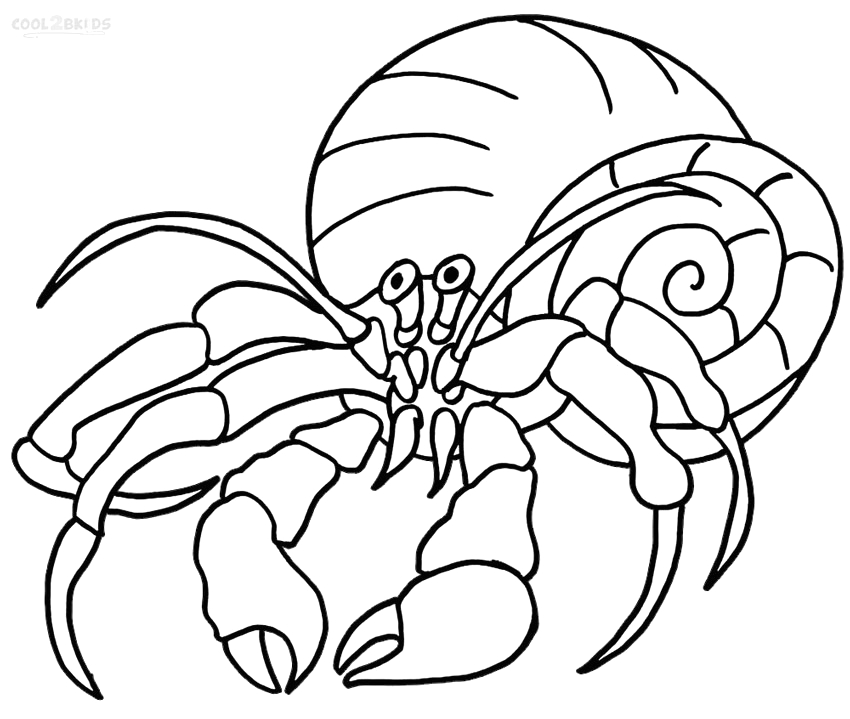 a house for hermit crab page sketch templates