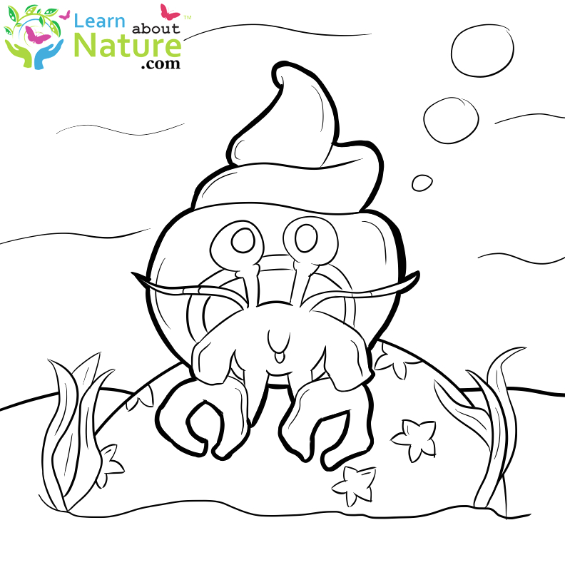 hermit crabs coloring page 14