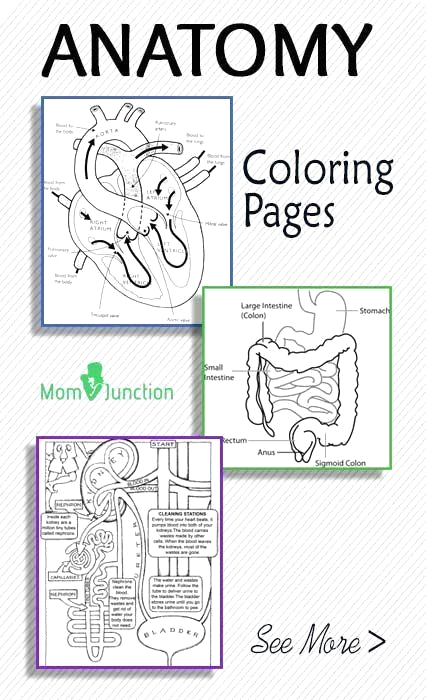 Anatomy and Physiology Coloring Workbook Page 136 Veterinary Anatomy Coloring Book Awesome top 10 Anatomy
