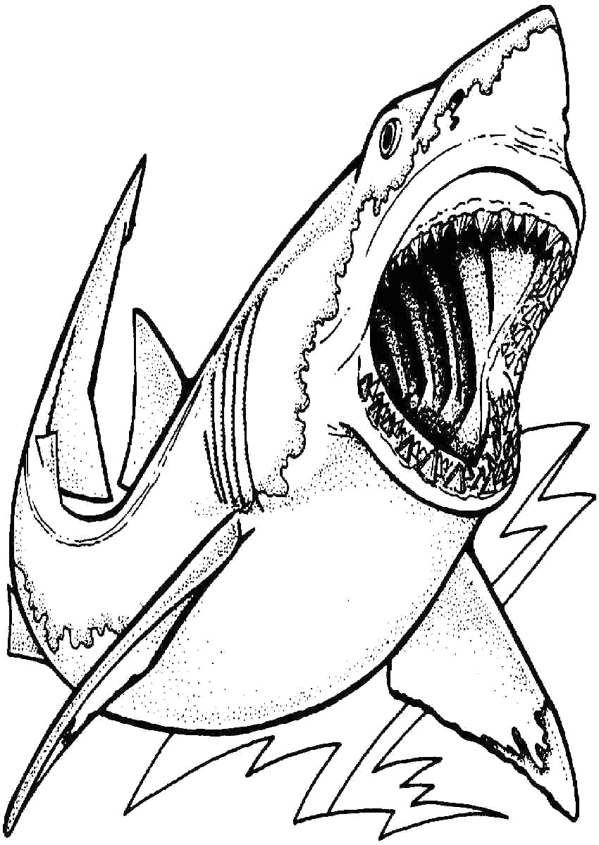 Free Printable Great White Shark Coloring Pages 24 Great White Shark Coloring Page In 2020 with Images