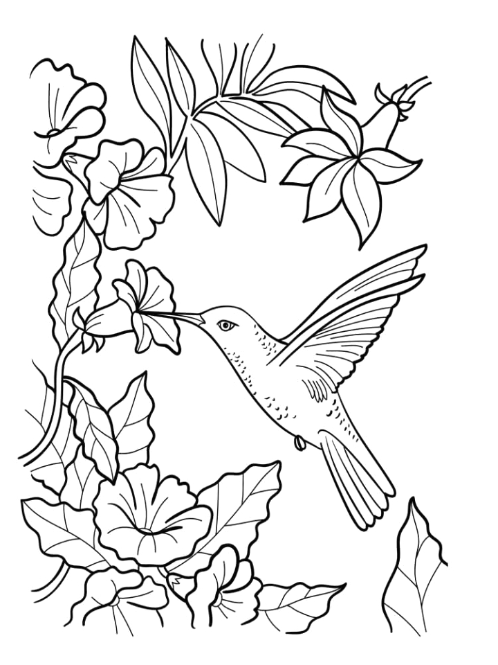 Free Printable Hummingbird Coloring Pages for Adults Hummingbird Coloring Pages for Adults at Getdrawings