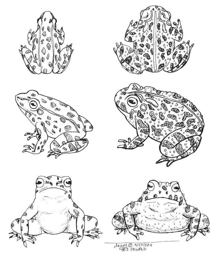 free frog and toad coloring pages