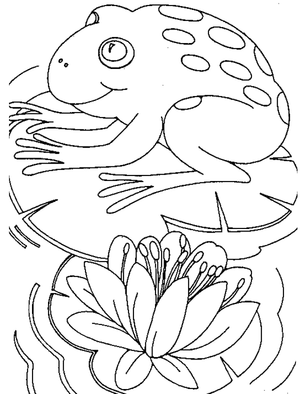 big frog sitting fortably on lily pad coloring page