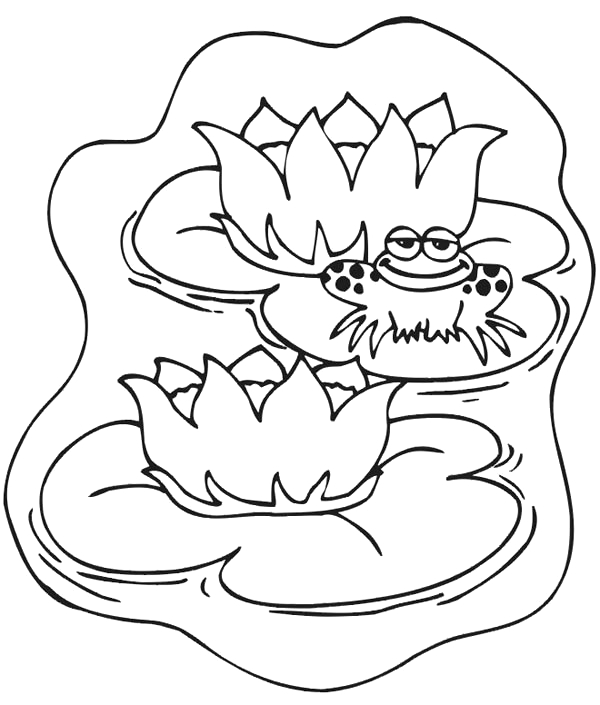 frog on lily pad drawing