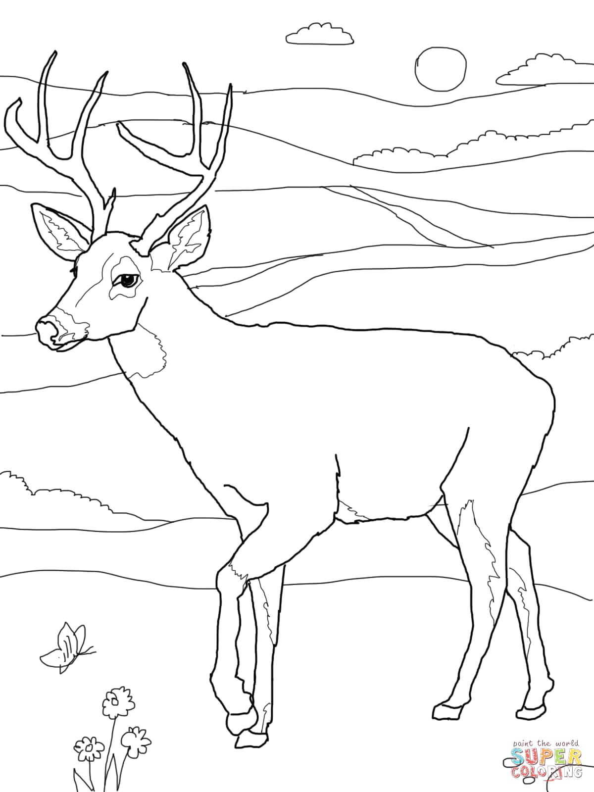 White Tailed Deer Coloring Pages to Print White Tailed Deer Coloring Page