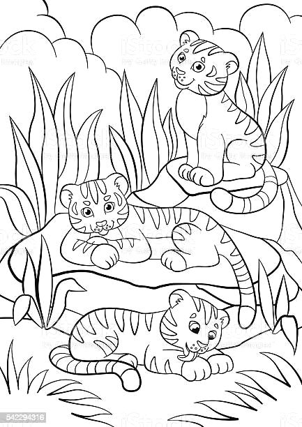 coloring pages wild animals three little cute baby tigers gm
