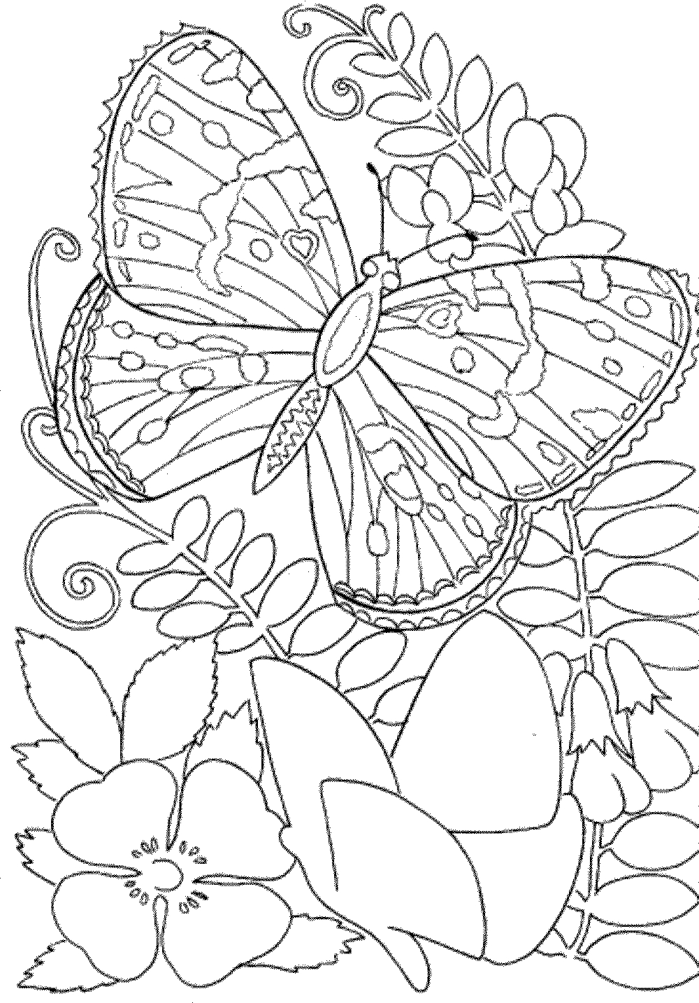 Coloring Pages for Adults to Print for Free Free Owl Adult Coloring Pages to Print Coloring Home