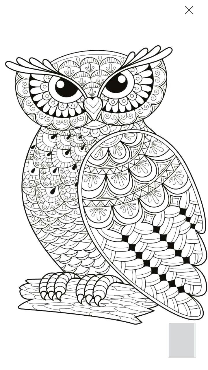 day of dead owl coloring pages